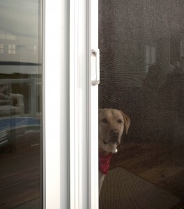 Dog enjoys the view that a Phantom retractable screen door provides.